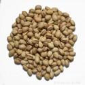 Pistache en coque grillée Espagne Pdt issu Agriculture Biologique FR BIO-01